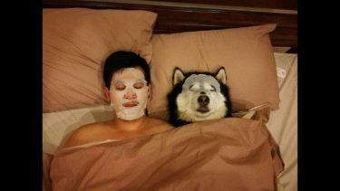 「面白い動物」あり得ないことをする犬, 猫・おもしろ犬, 猫のハプニング, 失敗集 #256