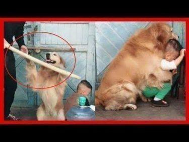 「面白い動物」あり得ないことをする犬, 猫・おもしろ犬, 猫のハプニング, 失敗集 #267