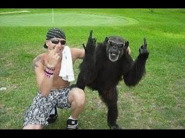 Funny monkey「面白い動物」あり得ないことをする犬, 猫・おもしろ犬, 猫のハプニング, 失敗集 #266