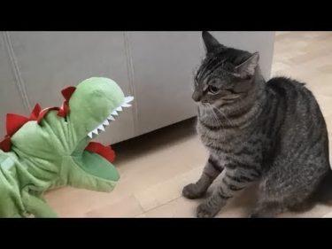 「面白い動物」あり得ないことをする犬, 猫・おもしろ犬, 猫のハプニング, 失敗集 #297