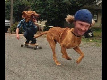 「面白い動物」あり得ないことをする犬, 猫・おもしろ犬, 猫のハプニング, 失敗集 #290