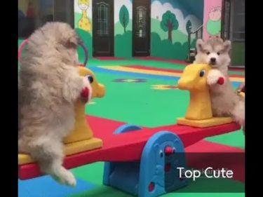 「面白い動物」あり得ないことをする犬, 猫・おもしろ犬, 猫のハプニング, 失敗集 #310