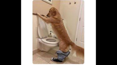 「面白い動物」あり得ないことをする犬, 猫・おもしろ犬, 猫のハプニング, 失敗集 #325