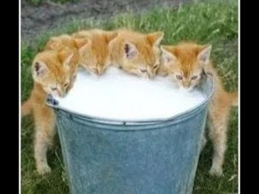 「面白い動物」あり得ないことをする犬, 猫・おもしろ犬, 猫のハプニング, 失敗集 #333