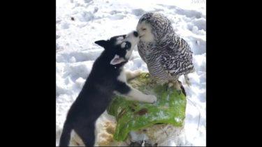 「面白い動物」あり得ないことをする犬, 猫・おもしろ犬, 猫のハプニング, 失敗集 #338