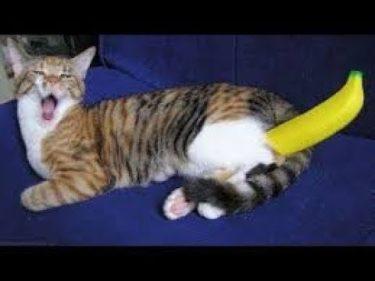 「面白い動物」あり得ないことをする犬, 猫・おもしろ犬, 猫のハプニング, 失敗集 #339