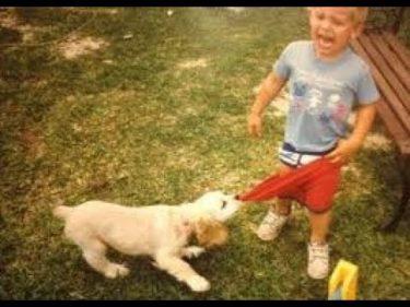 「面白い動物」あり得ないことをする犬, 猫・おもしろ犬, 猫のハプニング, 失敗集 #376