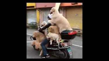 「面白い動物」あり得ないことをする犬, 猫・おもしろ犬, 猫のハプニング, 失敗集 #395