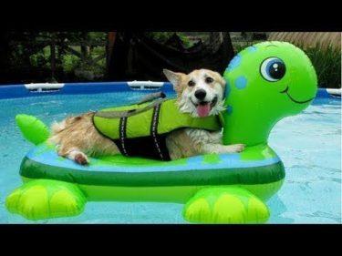 「面白い動物」あり得ないことをする犬, 猫・おもしろ犬, 猫のハプニング, 失敗集 #402