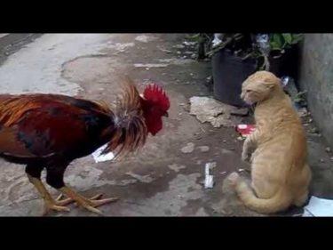 「面白い動物」あり得ないことをする犬, 猫・おもしろ犬, 猫のハプニング, 失敗集 #435