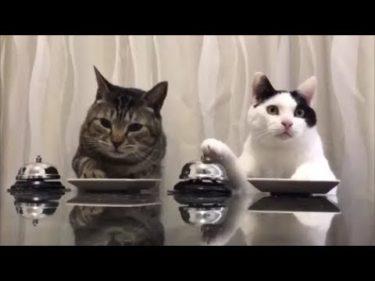 【ASMRな面白い動物】チャイムを鳴らしてえさを催促する猫ちゃんたち 超笑えるおもしろネコ動画 癒されてください!