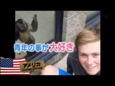 04  奇跡体験!アンビリバボー 胸キュン動物SP 0512