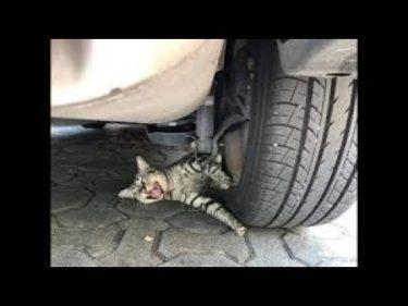 「面白い動物」あり得ないことをする犬, 猫・おもしろ犬, 猫のハプニング, 失敗集 #447