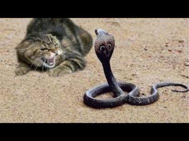 「面白い動物」あり得ないことをする犬, 猫・おもしろ犬, 猫のハプニング, 失敗集 # 454