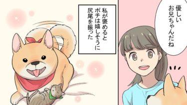 【漫画】捨て猫を拾ってきた私。家の柴犬と仲良くしてくれるか心配だったのだけど…(感動する話)【マンガ動画】