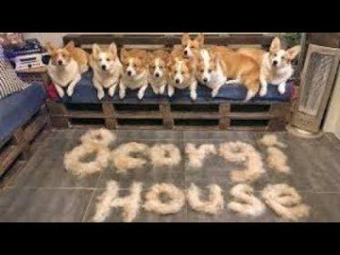 「面白い動物」あり得ないことをする犬, 猫・おもしろ犬, 猫のハプニング, 失敗集 #503