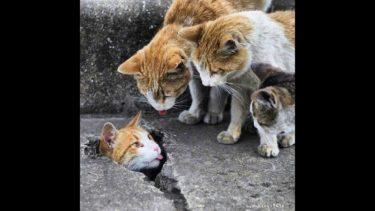 「面白い動物」あり得ないことをする犬, 猫・おもしろ犬, 猫のハプニング, 失敗集 #272