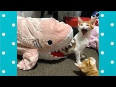 「面白い動物」あり得ないことをする犬, 猫・おもしろ犬, 猫のハプニング, 失敗集 #517