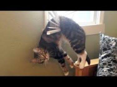 「面白い動物」あり得ないことをする犬, 猫・おもしろ犬, 猫のハプニング, 失敗集 #536