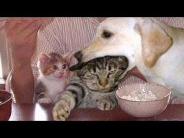 「面白い動物」あり得ないことをする犬, 猫・おもしろ犬, 猫のハプニング, 失敗集 #571