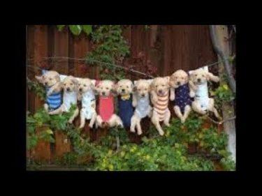 「面白い動物」あり得ないことをする犬, 猫・おもしろ犬, 猫のハプニング, 失敗集 #559