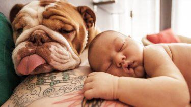 赤ちゃんと遊ぶパグ犬 🥰 犬は赤ちゃんを笑わせる 🐶 面白い犬と赤ちゃんは永遠の親友です