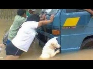 「絶対笑う2019」最高におもしろ犬,猫,動物のハプニング, 失敗画像集 #592