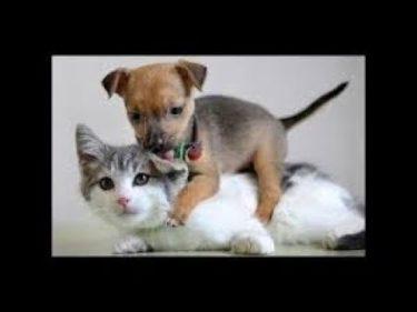 2019「おもしろ犬 」可愛くておもしろ犬のハプニング動画集・思わずに笑っちゃう犬の動画 #598