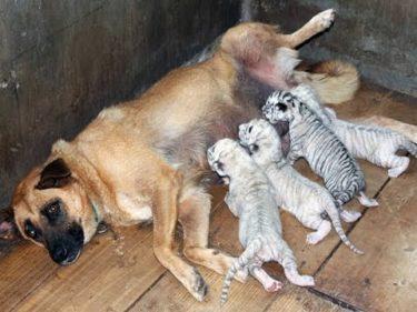2019「絶対笑う」最高におもしろ犬,猫,動物のハプニング, 失敗画像集 #611