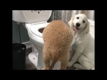 2020「絶対笑う」最高におもしろ犬,猫,動物のハプニング, 失敗画像集 #605