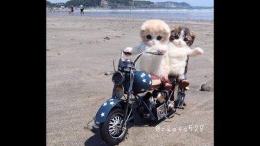 2019「おもしろ犬 」可愛くておもしろ犬のハプニング動画集・思わずに笑っちゃう犬の動画 #660