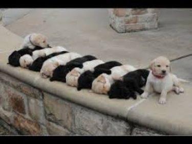 2019「おもしろ犬 」可愛くておもしろ犬のハプニング動画集・思わずに笑っちゃう犬の動画 #663