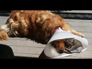 2020「絶対笑う」最高におもしろ犬,猫,動物のハプニング, 失敗画像集 #144