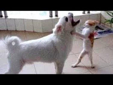 「面白い動物」あり得ないことをする犬, 猫・おもしろ犬, 猫のハプニング, 失敗集 #535