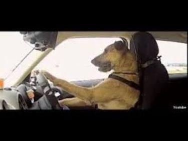 「面白い動物」あり得ないことをする犬, 猫・おもしろ犬, 猫のハプニング, 失敗集 #697